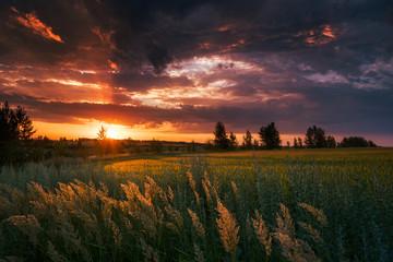 Fototapeta Windy evening over the fields