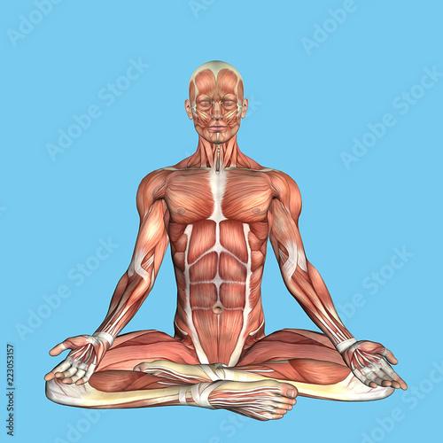 Fotografie, Tablou  Anatomy Meditative Pose: Featuring male torso major muscular groups including the sternocostal, rectus abdominis, pectoralis major, serratus anterior and latissimus dorsi