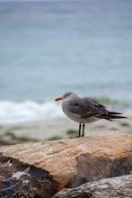Cold Bird On Pebble Beach