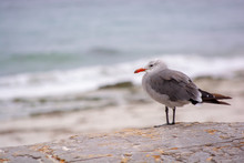 Bird Takes In The Waves
