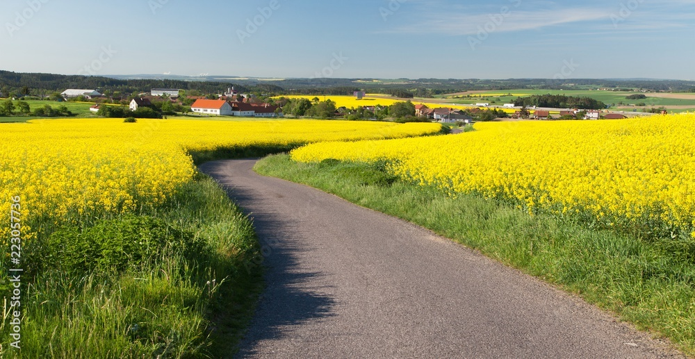 landscape rapeseed and road