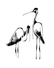 A Pair Of Black And White Herons, Stylized Vector Illustration