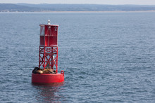 Three Sea Lions On A Red Buoy