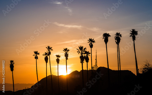 Fotomural Palm Trees in Hollywood at sunset