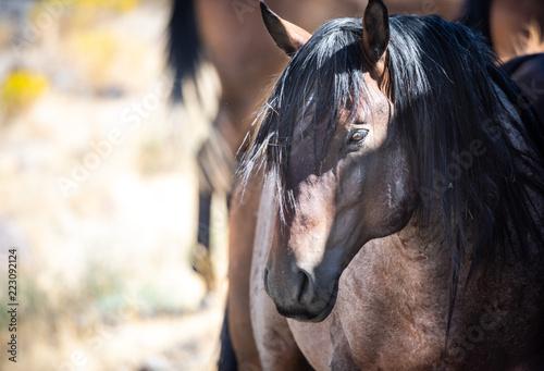 Photo  Onaqui Wild Horses