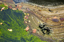 Colorful Patterns Of Dirt On T...