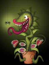 Carnivorous Plant Eat Spider
