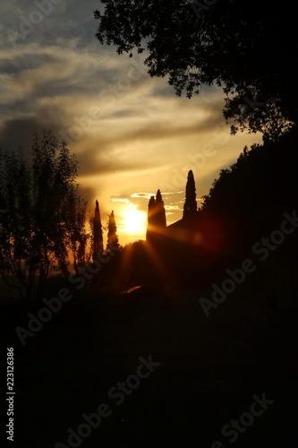Foto  silhouette dei cipressi al tramonto