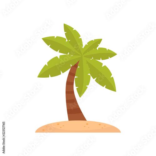 Fototapeta Palm tree, tropical plant vector Illustration on a white background obraz na płótnie