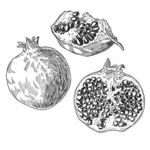 Sketch Pen And Ink Vintage Pomegranate Set Illustration, Draft Silhouette Drawing, Black Isolated On White Background. Food Graphic Etching Design.