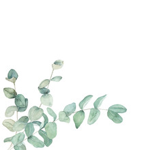 Watercolor Floral Card With Eucalyptus Branch. Hand Drawn Botanical Illustration. Art Background