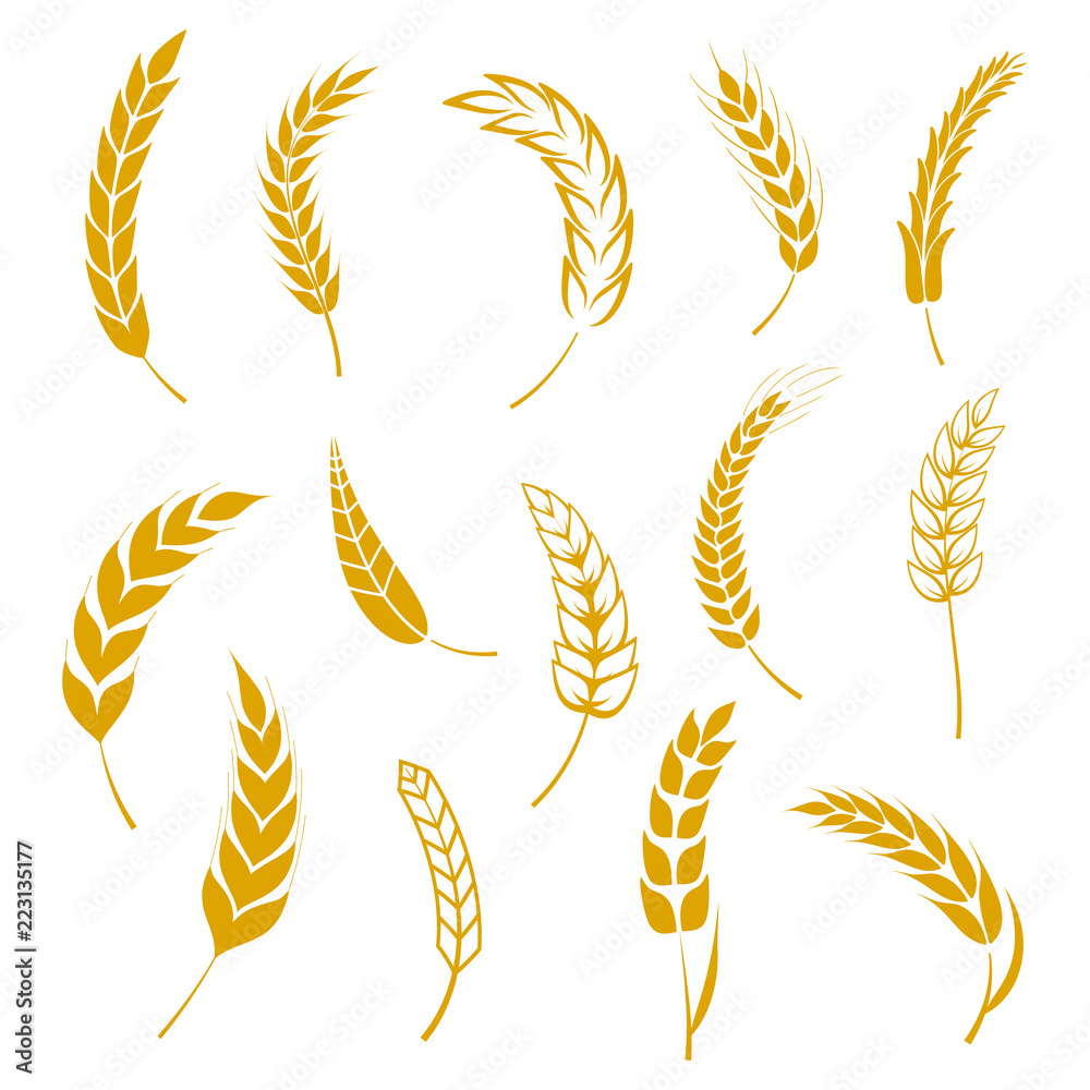 Fototapety, obrazy: Set of simple wheats ears icons and grain design elements for beer, organic wheats local farm fresh food, bakery themed wheat design, grain, beer elements, wheat simple. Vector illustration