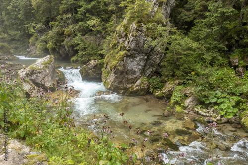 Foto op Aluminium Bos rivier Fast river near forest in Bucegi mountains, Romania