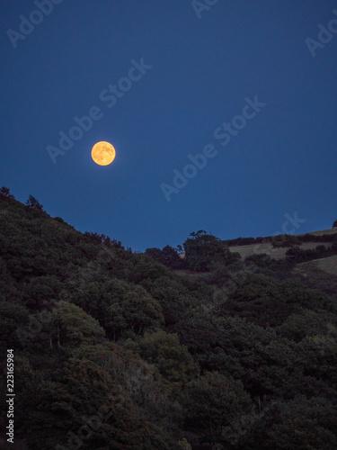 Tuinposter Zwart Full moon oder Landscape