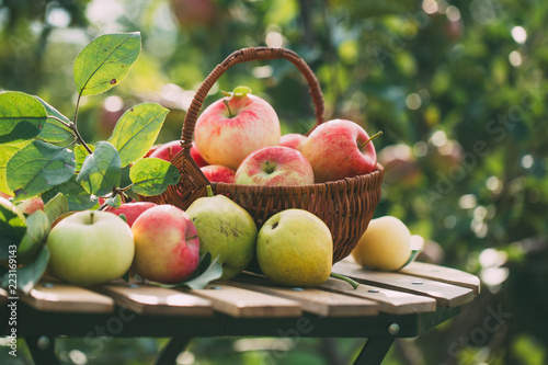 Organic apples and pears in basket on a wooden table, outdoors. Wallpaper Mural