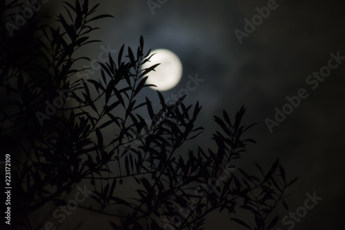 olive leaves with full moon background
