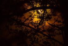 Månsken Genom Trädgrenar