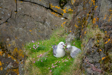 CLOSE UP: Two Young Seagulls N...