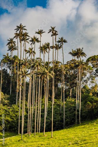 Keuken foto achterwand Zuid-Amerika land El Bosque de Las Palmas Landscapes of palm trees in Valley Cocora near Salento Quindio in Colombia South America