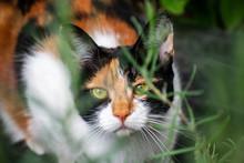Tortoiseshell Calico Cat Hidin...