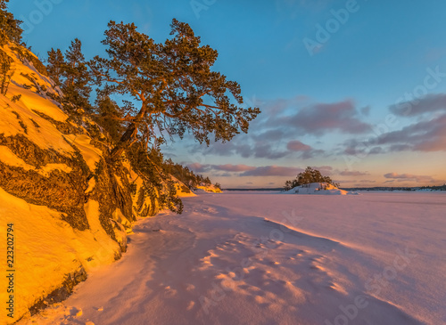 A colorful winter sunset on the Ladoga Lake. Pink light on the pines, on the snow.