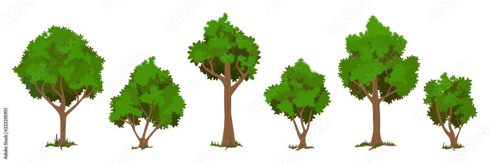 Fototapety, obrazy: Vector trees set