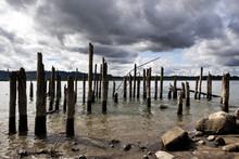 Pier Pilings On The Columbia River