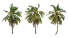 Set Of Coconut Trees On White Background
