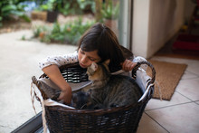 A Girl Petting Kittens In A Basket.