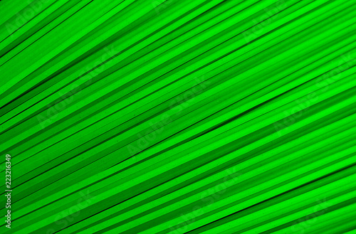 the texture of many stripes is diagonally green - 223216349
