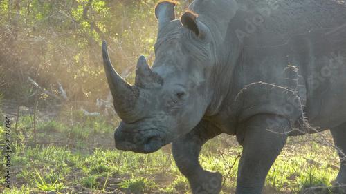 safari rhino South Africa