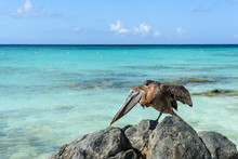 Close Up Of A Pelican On A Cliff