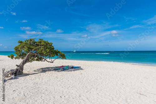 Photo  A tree near the shore of an idyllic beach