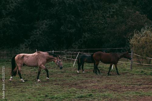 Photo  Horse in the nature, horseback riding