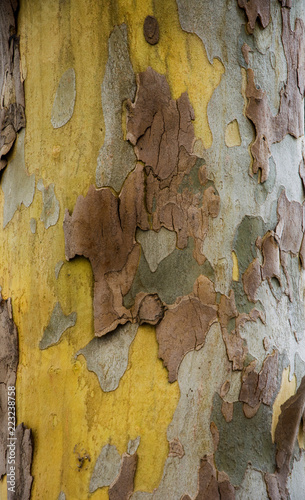 Foto auf AluDibond Alte schmutzig texturierte wand Textures of plane trees. Different colors and shades. Yellow, green, blue, brown and gray. The background of tree trunks.