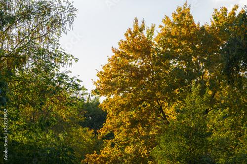Fotografie, Obraz  Baum mit Herbstlaub in Hamburg