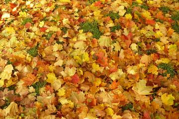Jesień, suche liście w parku