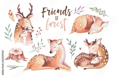 Fototapeta premium Cute baby akwarela jelenia zwierząt, ilustracja na białym tle przedszkola odzież dla dzieci, wzór. Obraz boho z akwareli