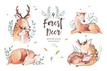 Cute Watercolor Baby Deer Anim...