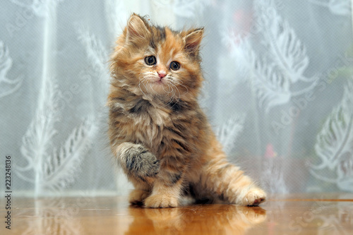 The small amusing fluffy kitten plays Canvas Print