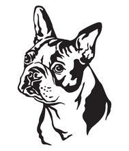 Decorative Portrait Of Dog Boston Terrier Vector Illustration
