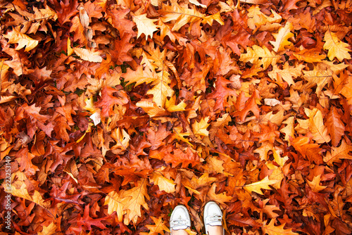 Foto op Canvas Baksteen Colorful and bright background made of autumn leaves