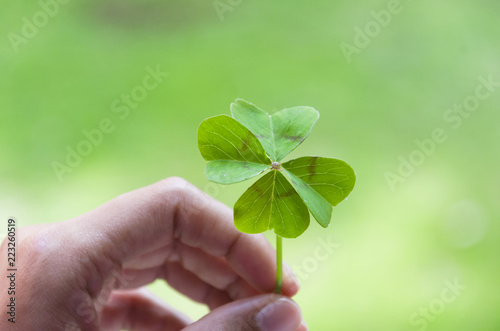 Woman's hand holding four leaf clover