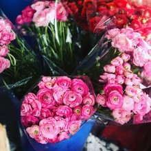 Flowers For Sale At A Market, Israel