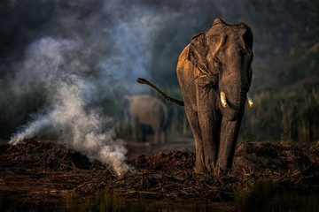 Elephant standing near pond