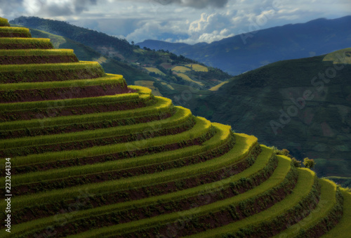 Poster Rijstvelden Scenic view of terraced rice fields against cloudy sky