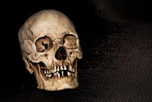 Human Skeleton Skull Head Isol...