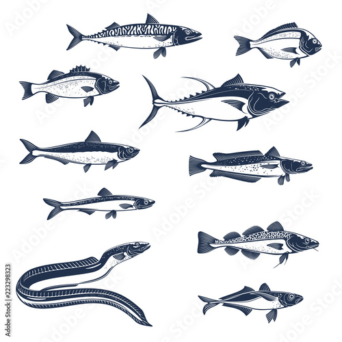 Valokuva  Sea and ocean fishes vector icons