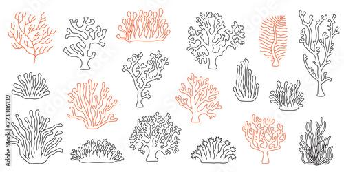Photo corals line