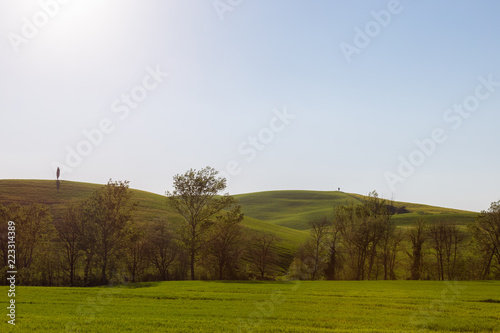 Deurstickers Toscane Typical Tuscany (Val d'Orcia) landscape, with isolated cypresses trees on green curvy hills